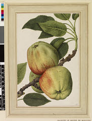 00844598001