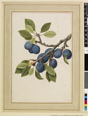 00844600001