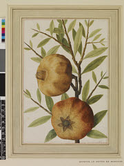 00844603001