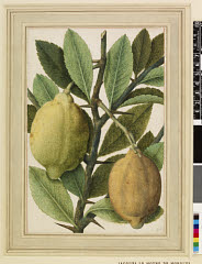 00844604001