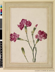 00844725001