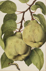 00844727001