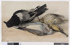01613031071