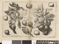 01613292486